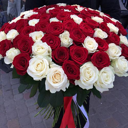 51 krasnaya belaya roza