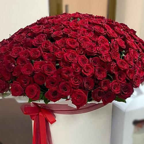 301 roses